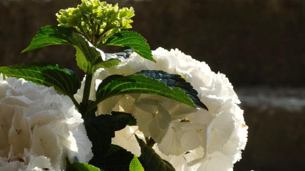 Prachtige bloemen op het terras