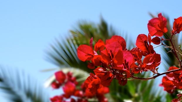 Ibiza| Mooiste plek op aarde
