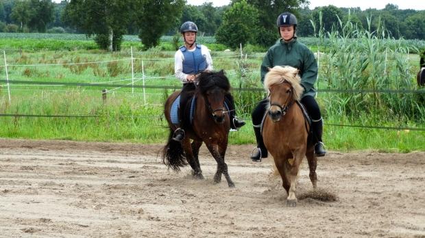 Heerlijk in de bak crossen of in het bos met je favoriete paard