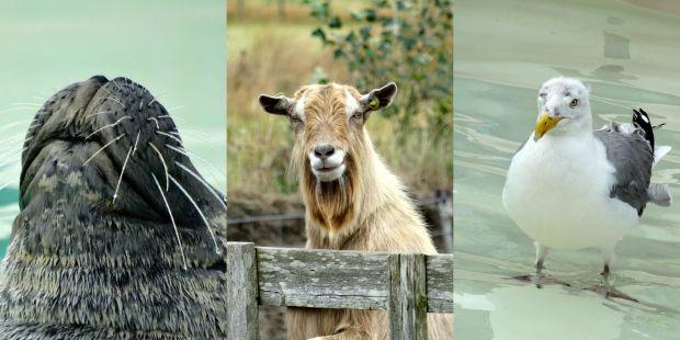 Prachtige dieren op Texel