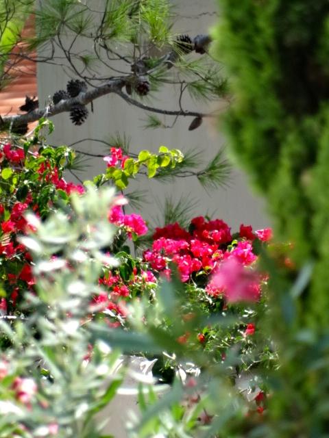 Heerlijk genieten van de tuin.